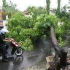 Walikota Perintahkan DKP Rampingkan Pohon