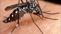Wabah Chikungunya Serang Warga Gantiwarno Klaten