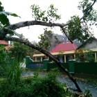 Pohon Roboh Menimpa Kabel Listrik di Glagah Jatinom