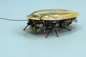 Ilmuwan Berhasil Membuat Proyotype Robot Kecoak