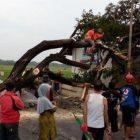 Puting Beliung di Sukoharjo Tumbangkan Sejumlah Pohon di Beberapa Lokasi